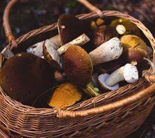 Mushrooms-nieuws.jpg